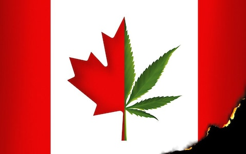Get your license to grow medical cannabis in Canada