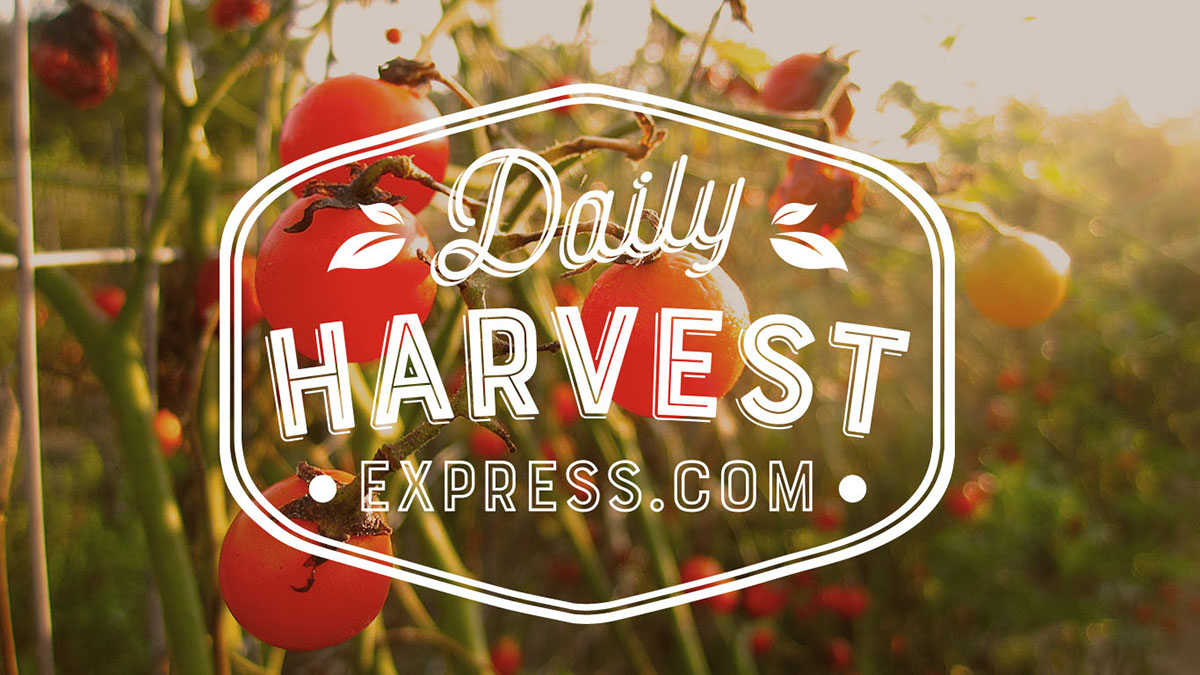 100$ Daily Harvest Express GC