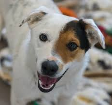 The ABCs of Living with Dogs Care and training resource